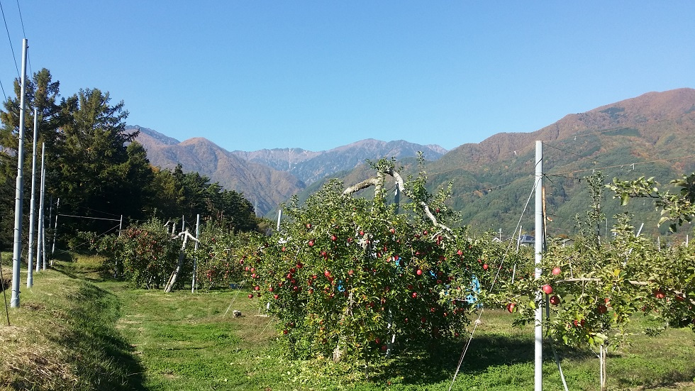 【11/20・11/27開催】リンゴオーナー収穫祭☆