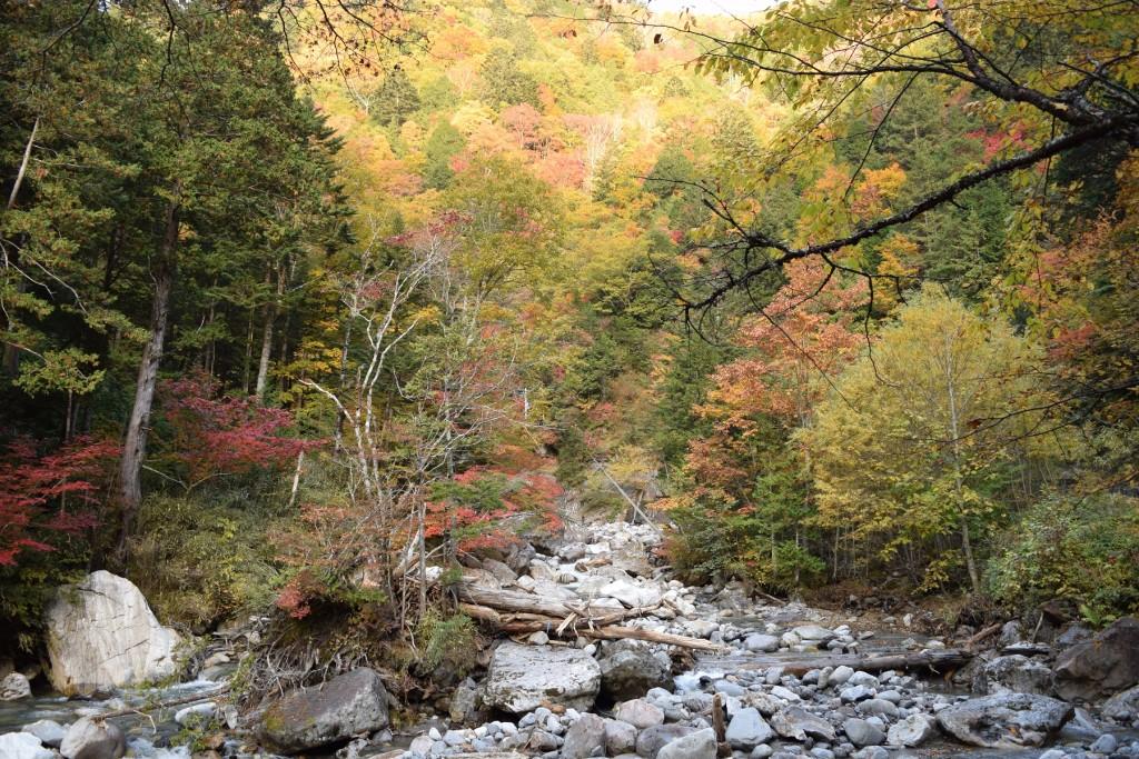 宮田高原&黒川渓谷、秋の紅葉真っ盛りです♪