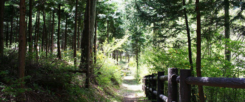 森と水のリラックス空間